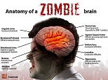 The science of ZOMBIES and how to avoid becoming their dinner