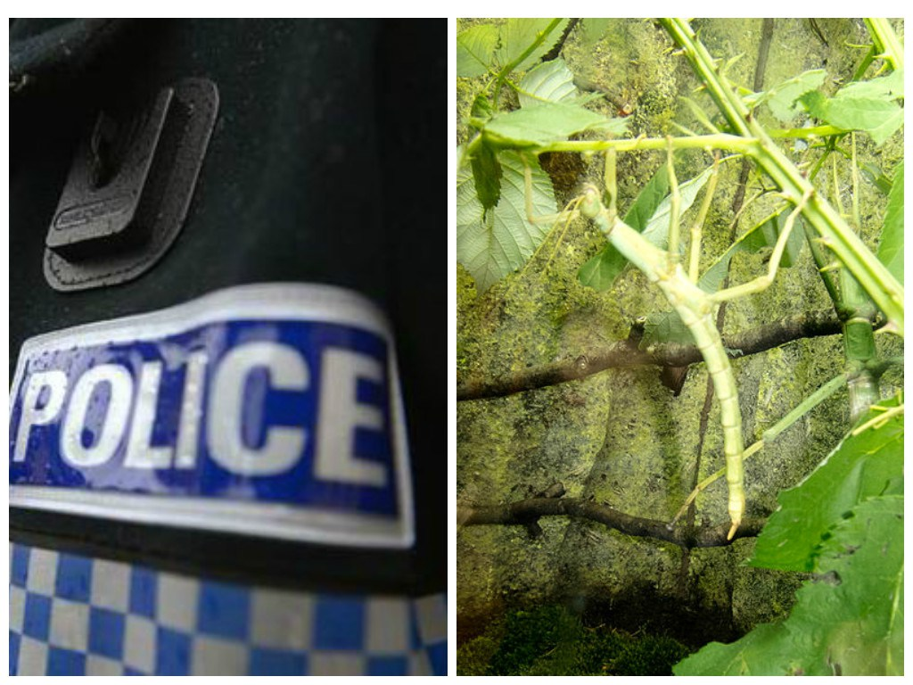Mum rang 999 in stick insect custody battle